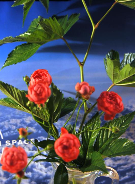 shizukart  Several Picture Books-shizukart_0829-01