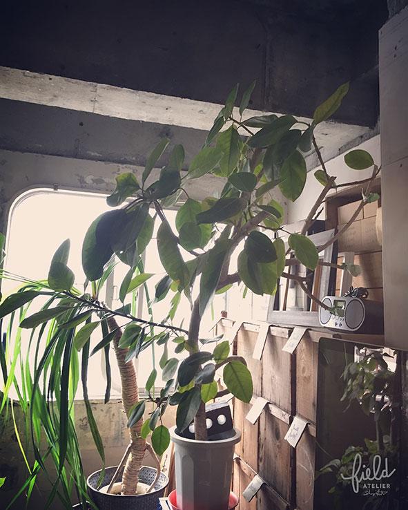 植物レイアウト変え